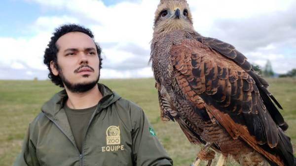 Falcoaria é o nome dado à arte de criar, treinar e cuidar de falcões