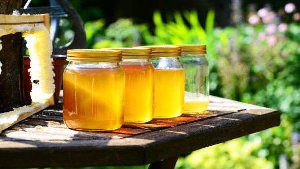 Mel de uruçu é amarelado e é produzido pela abelha uruçu