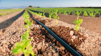Irrigação localizada aplica a água em somente uma área da plantação