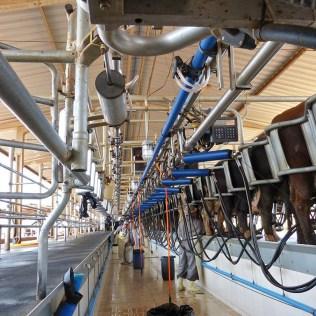 Ordenhadeira facilita a rotina dos produtores de leite
