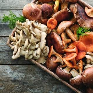É grande a quantidade de cogumelos medicinais encontrada