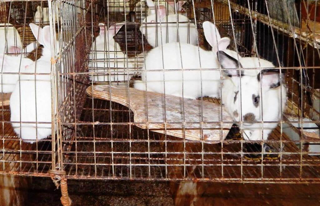 Criação de coelhos