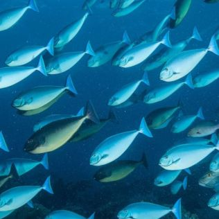 Peixes fazem bem à saúde e deveriam ser mais consumidos