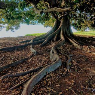 Raiz axial é uma raiz principal da qual saem pequenas raízes