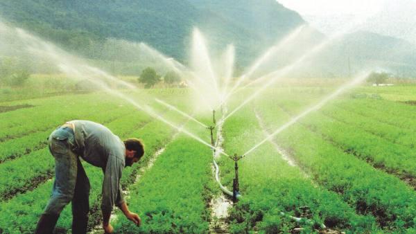 Conhecer os diferentes tipos de irrigação é importante para bons resultados