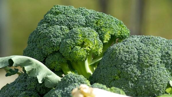 Como plantar brócolis: confira dicas práticas e importantes