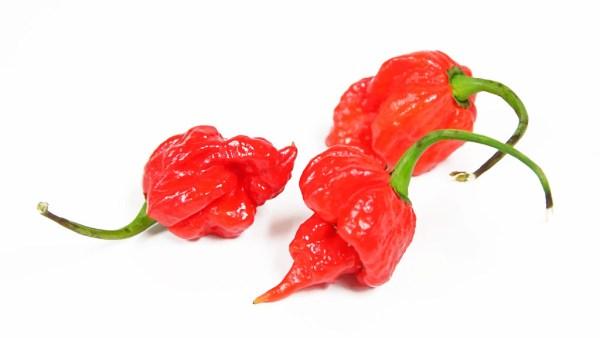 Pimenta Trinidad Scorpion tem destaque entre as mais picantes