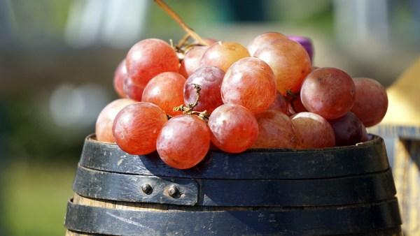 Uva benitaka é resultante de mutação da uva Itália