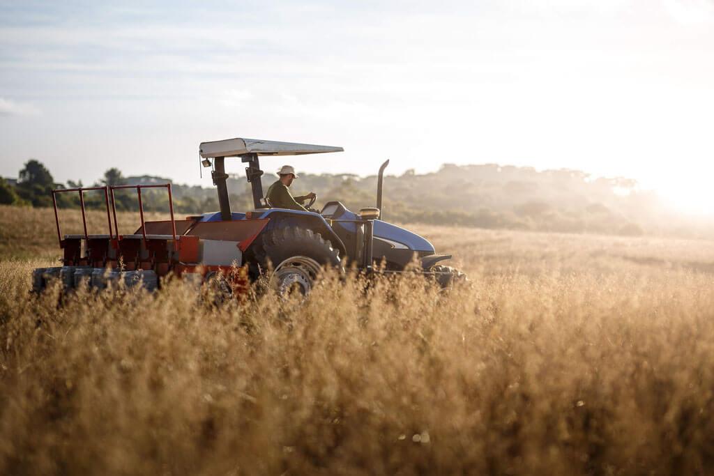 agricultura comercial