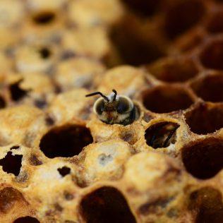 Colmeia é abrigo inteligente e seguros para proteger as abelhas