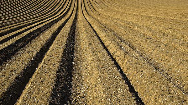 Correção do solo é fundamental para a saúde da plantação