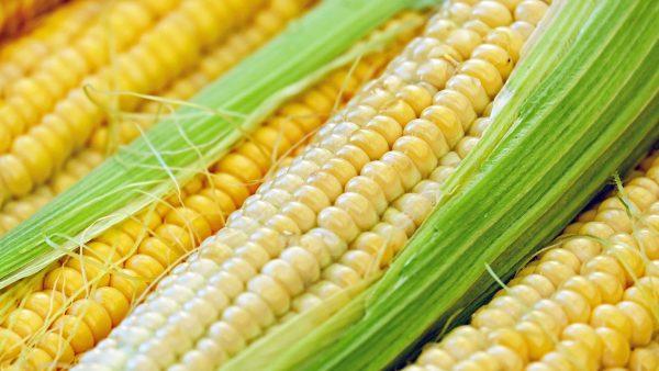 Subprodutos do milho fazem parte da cultura brasileira