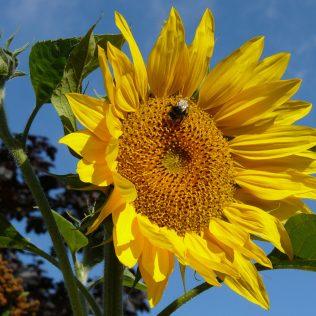 Abelha uruçu tem mel que oferece grande rentabilidade aos produtores