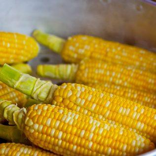 Farelo de milho é uma opção de alimentação para os animais