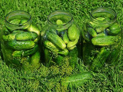 Pepino em conserva é uma opção saudável de consumir o vegetal