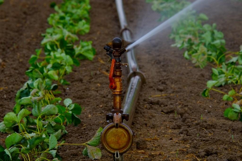 sistema de irrigação jogando água em plantação