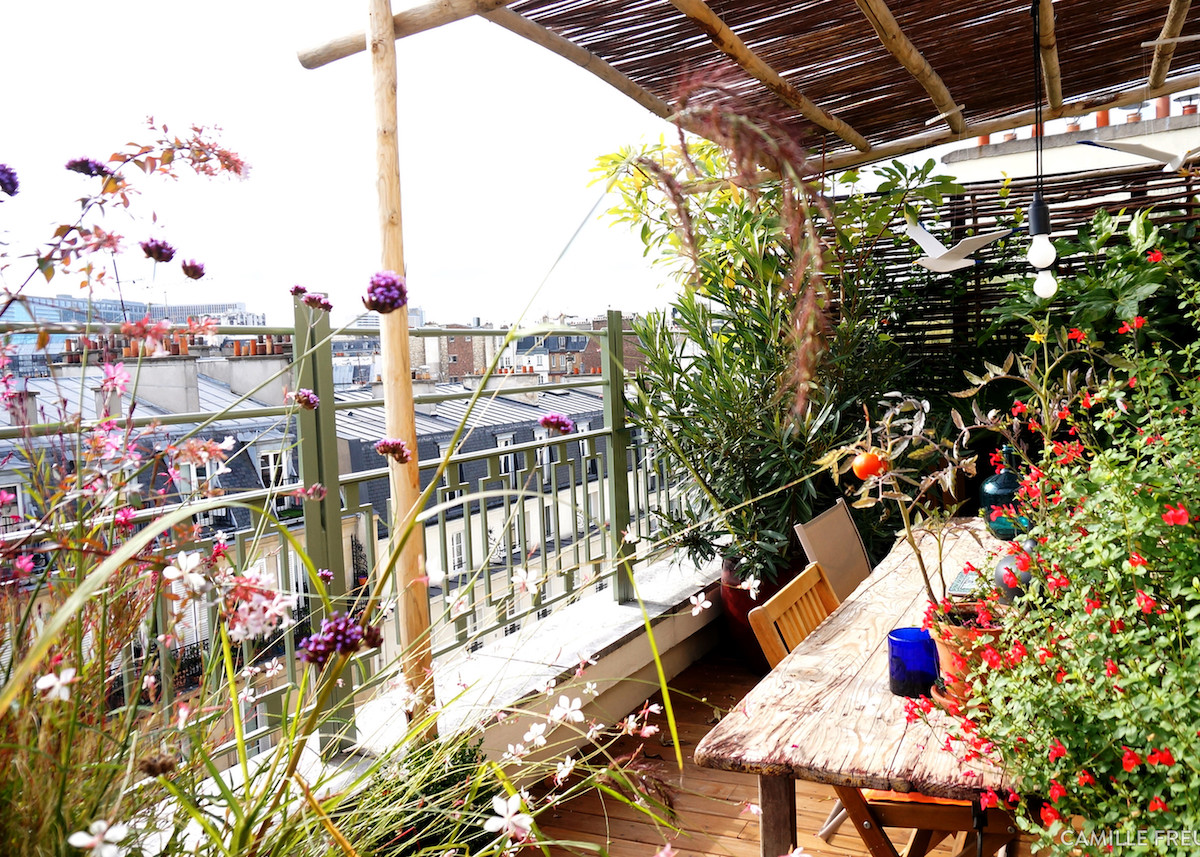 plantes balcon exposition sud blog