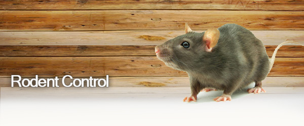 rodent_pest_control