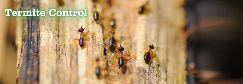 Image result for termite control banner