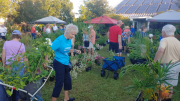 Visitors shop for plants at the 2019 Annual Master Gardener Volunteer Plant Sale and EdFest. CREDIT UF IFAS Extension Sarasota County