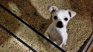Schweiz verbietet anonymen Onlinehandel von Hunden.