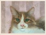 Fluffernutter Cat Depot cat