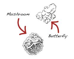 Popcorn Diagram