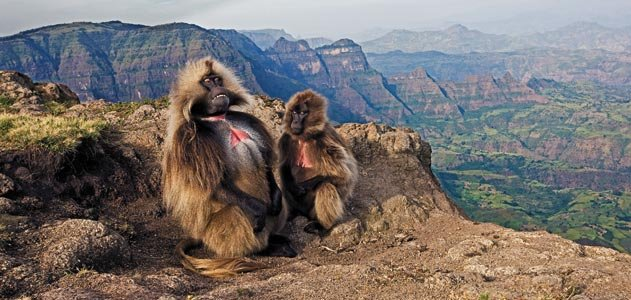 12 days air safari in Ethiopia_ October 2016