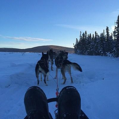 mark dog sledding