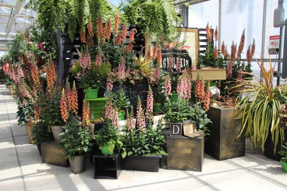 P Garden Centre Mold