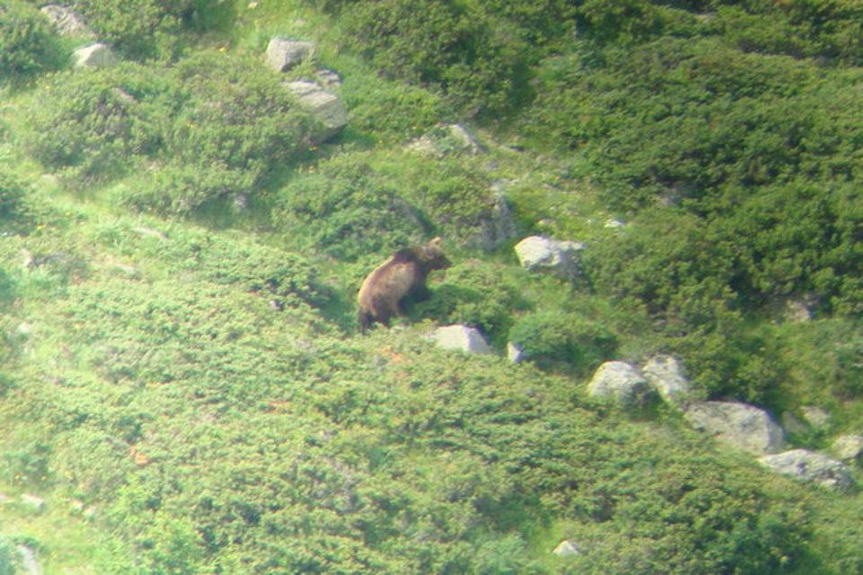 Chur: Da tanzt der Bär nicht mehr, er wurde abgeschossen.