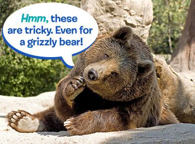 GrizzlyBear Quiz
