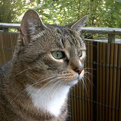 quiz citologico 3 gatto europeo il paziente 2