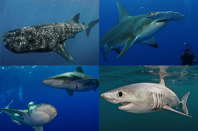 What's Your Shark Personality?