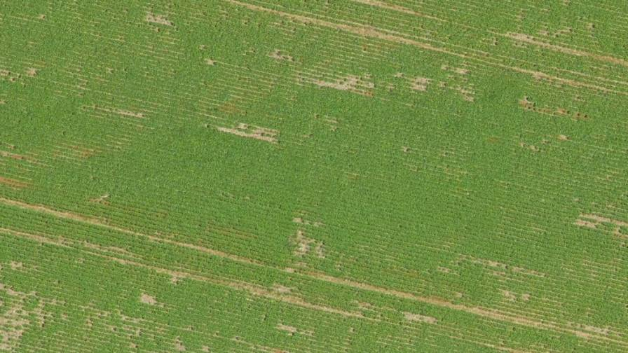 Soybean field in Mato Grasso, Brazil photographed by drone
