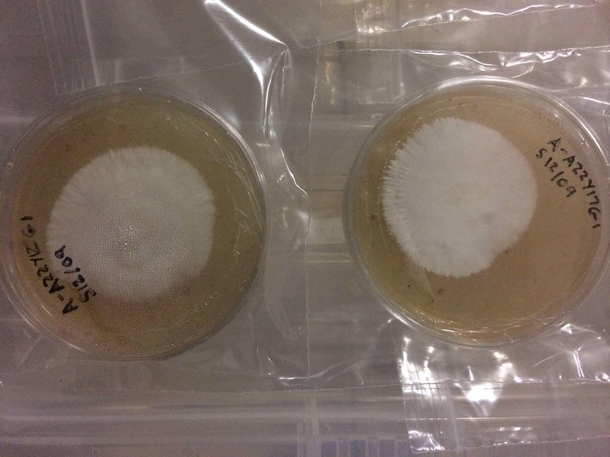 Mushroom Grow Monotub Tek Bulk