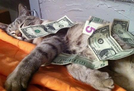 Risultati immagini per cani gatti soldi