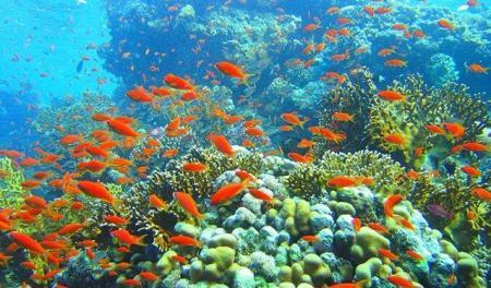 кораловый риф у Рас Мухамеда