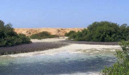 мангровые рощи