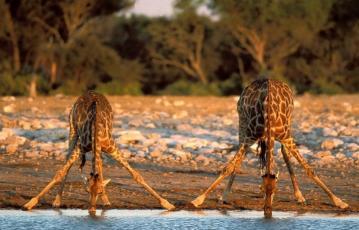 Serengeti_tour_2_days_1_night_3
