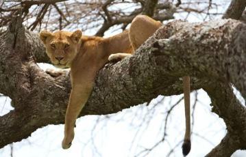 Serengeti_tour_2_days_1_night_4