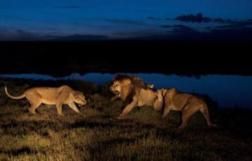 Serengeti_tour_2_days_1_night_6