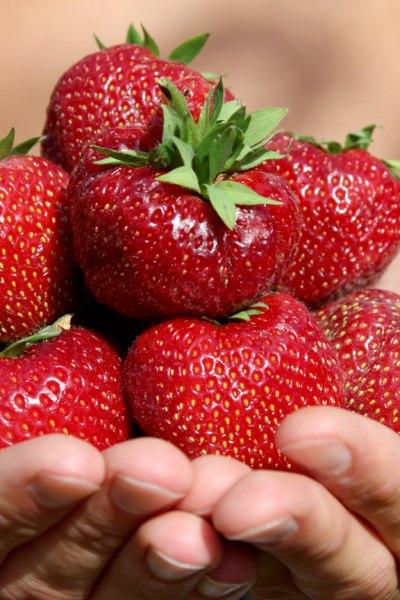 Erdbeeren – die süße Verführung mit Power