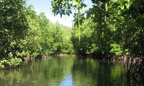 Mangroven Resort M01 - Coron Omgeving, Palawan, Filipijnen
