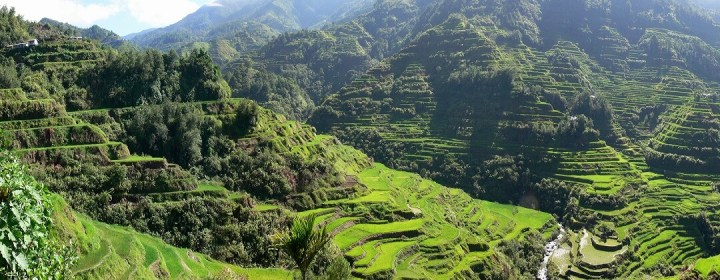 Rijstterrassen nabij Banaue
