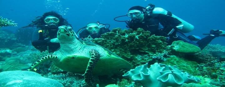 Duiken met een zeeschildpad