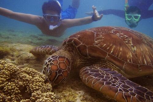 Snorkelen met zeeschildpadden bij Apo Island, Negros Oriental, Central Visayas, Filipijnen