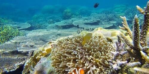 Twin Reef - Port Barton, Palawan, Filipijnen