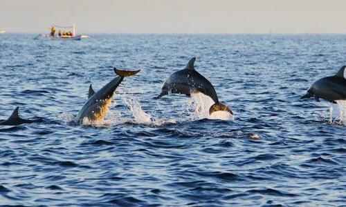 Dolfijnen spotten Bohol Filipijnen