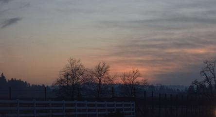 dawn with trees and fence 12-2-14